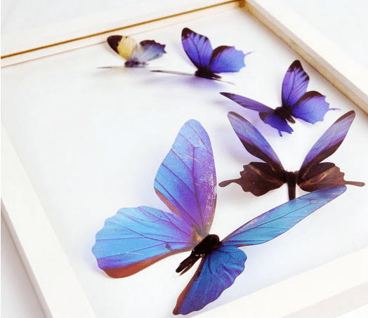 blue butterfly Sticker For Wall Decor