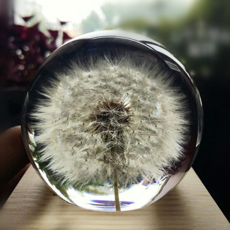 Custom Real Natural Dandelion Paperweight Sphere